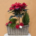 Jardín de Navidad con árbol de flor de pascua