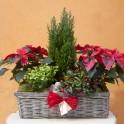 Jardín de Navidad en cesto alargado y ángel de piedra