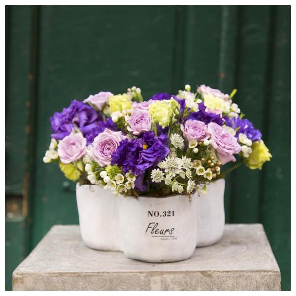 Arreglo de flores en maceta de tr bol alfabia flores - Flores de maceta ...