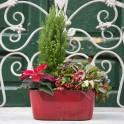 Jardinera Roja Plantas de Navidad
