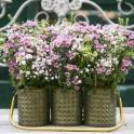 3 Macetas Zinc con asa, Flores Silvestres