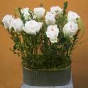 Jardín de Rosas en Zinc Ovalado
